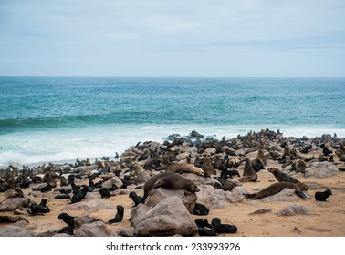 Sea lion, Cape Cross, Namibia, Africa