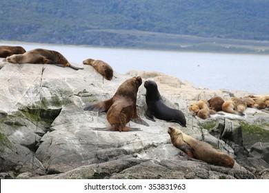 Sea lion discussion