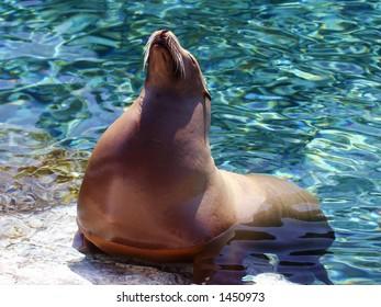A sea lion enjoying the sun
