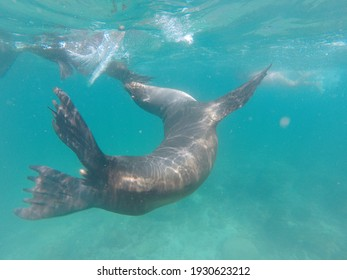 Sea lion at Galapago's Island. On the beach, at sea, swimming underwater.
