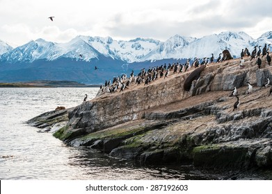 Sea lion and King Cormorant colony sits on an Island in the Beagle Channel. Tierra del Fuego, Argentina - Chile