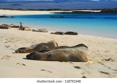 Sea Lion on a Beach, Galapagos islands, Ecuador, South America