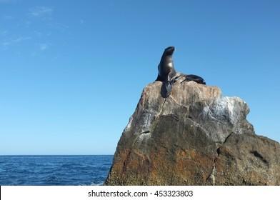 Sea lion on rock near El Arco, Cabo San Lucas, Baja California Sur, Mexico