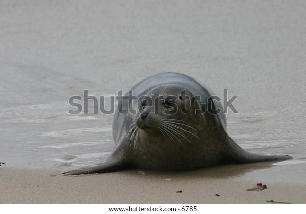 sea lion on a sandy beach