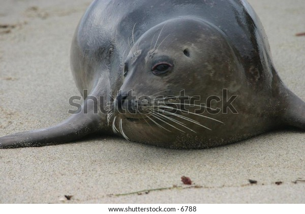sea lion on a sandy beach