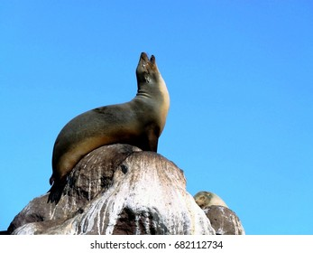 Sea lion on the top of  rocks