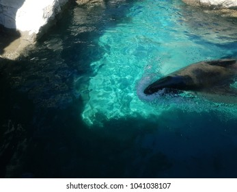 sea lion out of the water when swimming
