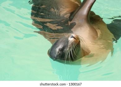 Sea Lion performing at Loro Parque