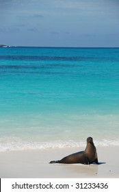 A sea lion poses on the beach on Espanola, Galapagos