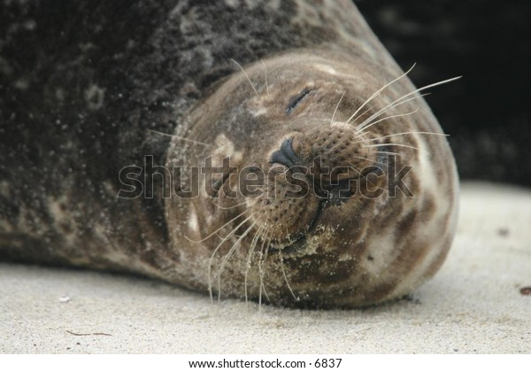 sea lion relaxing on a sandy beach