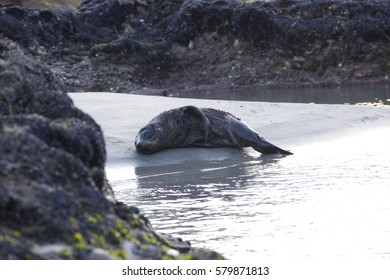 Sea lion sleeping on the beach that surrounding by the rocks