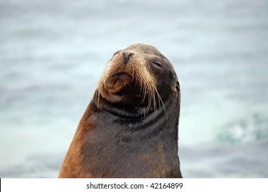 Sea lion smile. Galapagos.