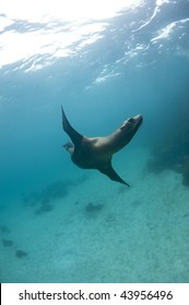 Sea lion underwater, Galapagos