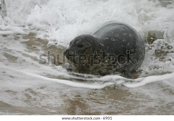 sea lion and the water