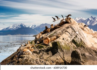 Sea lions and Albatros on isla in  beagle channel near Ushuaia (Argentina)
