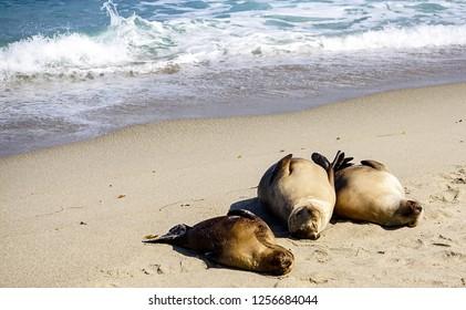 Sea Lions basking in the sun on the coastline off the California Coast