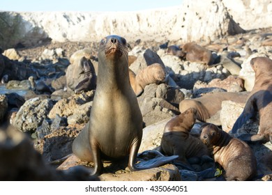 Sea lions close up on the beach