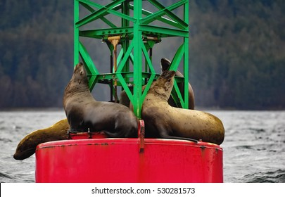 Sea Lions in Juneau Alaska