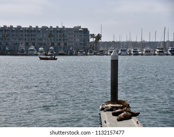 Sea Lions laying on the docks in the harbor