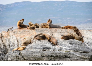 Sea lions lying on the rock in Antarctica