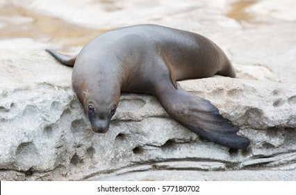 Sea lions lying on the rocks