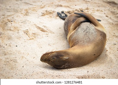 Sea lions on the beach of National park Galapagos, Ecuador
