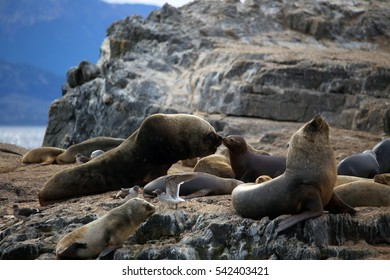 Sea lions on the rock