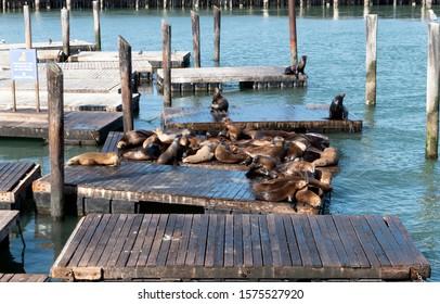 Sea Lions, Pier 39 San Francisco