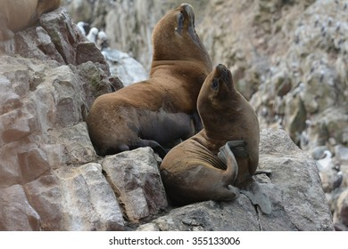 Sea lions relaxing on the rocks of the Ballestas Islands in the Paracas National park. Peru.