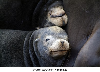 sea lions resting on a pier