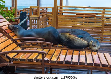 Sea lions resting on sun chairs