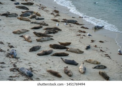 Sea lions & seals napping on a cove under the sun at La Jolla, San Diego, California. The beach is closed from December 15 to May 15 because it has become a favorite breeding ground for seals.