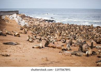 Sea Lions (Seals, Otariinae) with pups at the beach near Cape Cross, Skeleton Coast, Namibia, Africa