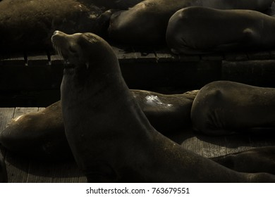 Sea lions taking sunbath in San Francisco