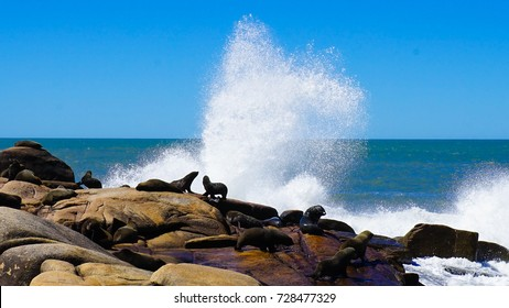Sea Lions in Uruguay