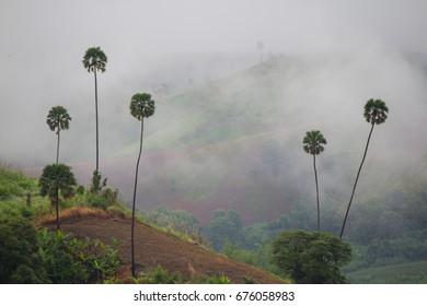Sea Mist Mountain View
