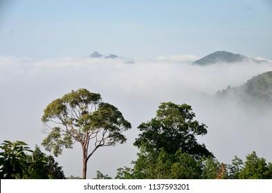 sea mist in yala Thailand no1