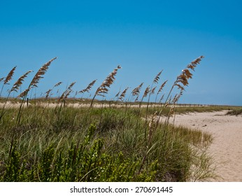 Sea Oats along a sandy path.  bright blue sky with room for copy space