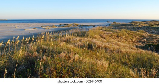 sea oats in the dunes in late afternoon sunlight Fort Macon