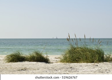Sea oats and grass on a sand dune on the beach.