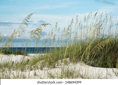 Sea oats and native dune grasses in the sand dunes, overlooking deep blue water of the Gulf of Mexico.
