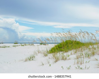 Sea Oats on the Beautiful White Sand Beach of Florida's Gulf Coast