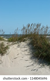 Sea Oats on a Dune - Summer