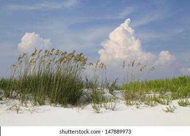 Sea Oats on a White Sand Florida Beach on a Beautiful Cloudy Day