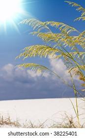 sea oats over blue sunny sky