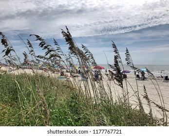Sea oats at the seashore.