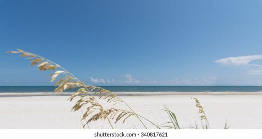 Sea oats and shoreline in Florida