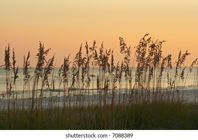 Sea Oats silhouetted against an orange sky.