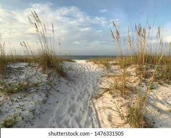 Sea Oats and Sunrise on Well-Worn Path Through the Sand Dunes.