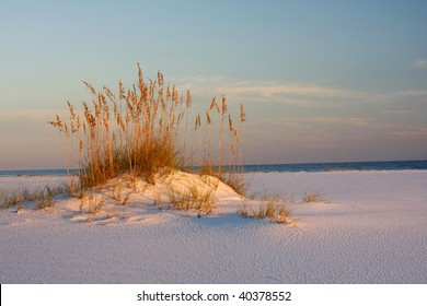 Sea Oats and White Sand at Sunset